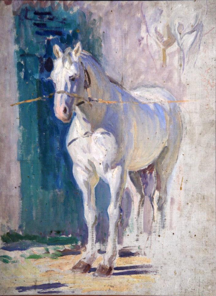 Studio di un cavallo